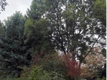 Keine Fällung des Baumbestandes im Roesebeckcarré